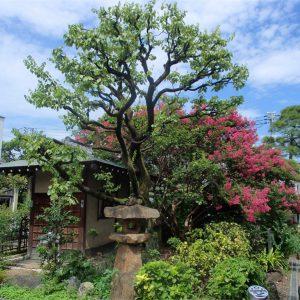 感通寺の庭園