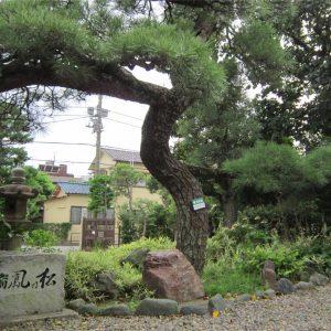 宣要寺の瑞鳳の松